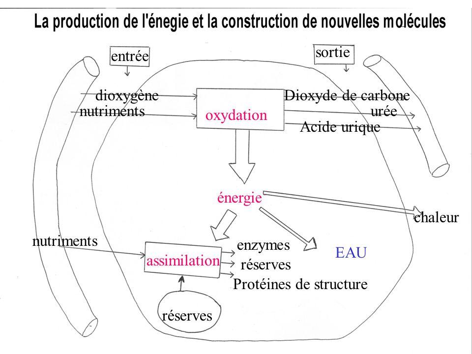 oxydation entrée sortie dioxygène nutriments Dioxyde de carbone urée Acide urique énergie nutriments réserves Protéines de structure réserves enzymes