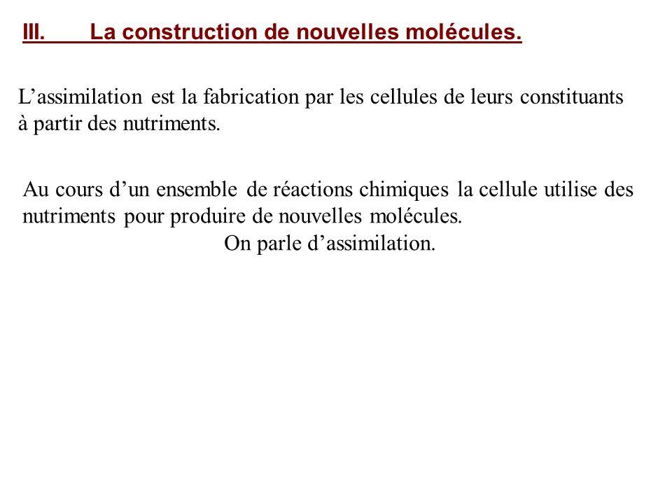 III.La construction de nouvelles molécules. Lassimilation est la fabrication par les cellules de leurs constituants à partir des nutriments. Au cours