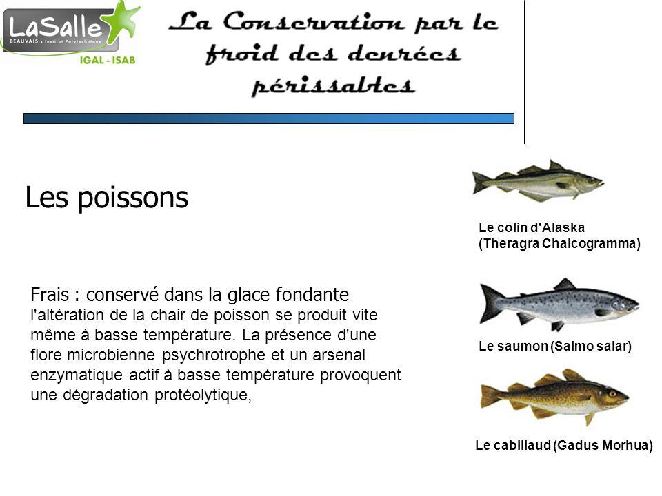 Les poissons Frais : conservé dans la glace fondante l'altération de la chair de poisson se produit vite même à basse température. La présence d'une f