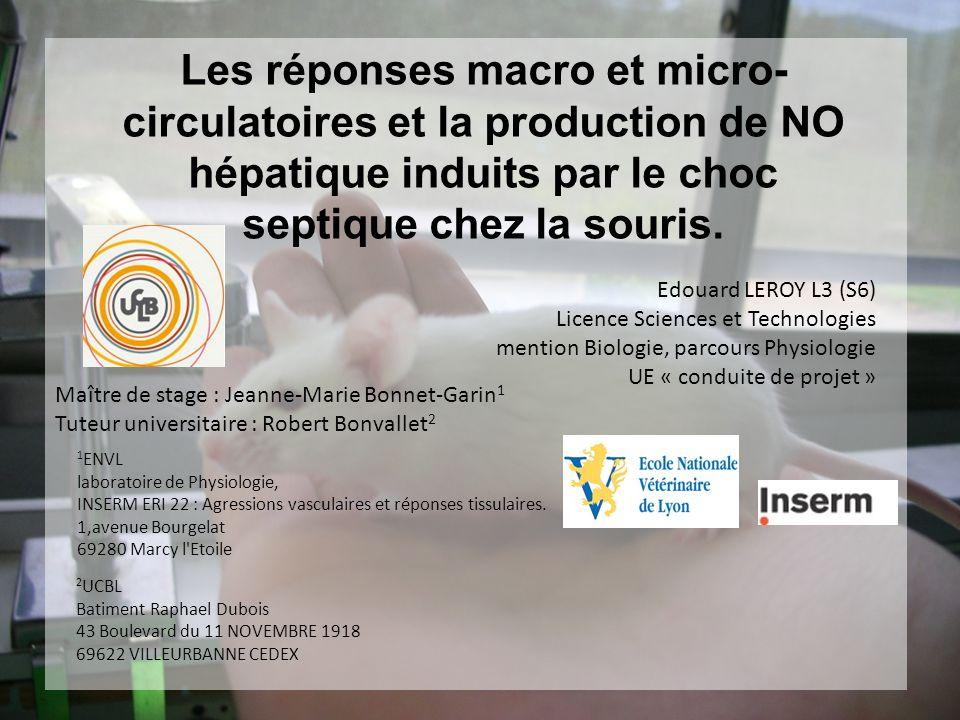 Les réponses macro et micro- circulatoires et la production de NO hépatique induits par le choc septique chez la souris. Edouard LEROY L3 (S6) Licence