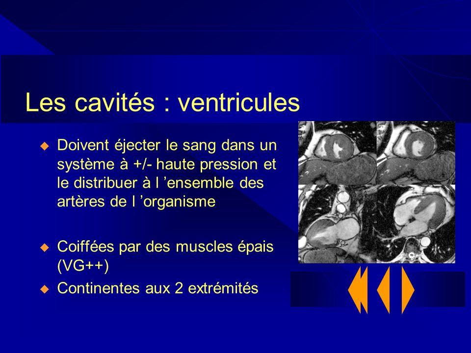 Les cavités : ventricules Doivent éjecter le sang dans un système à +/- haute pression et le distribuer à l ensemble des artères de l organisme Coiffé