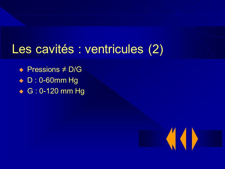 Les cavités : ventricules (2) Pressions D/G D : 0-60mm Hg G : 0-120 mm Hg