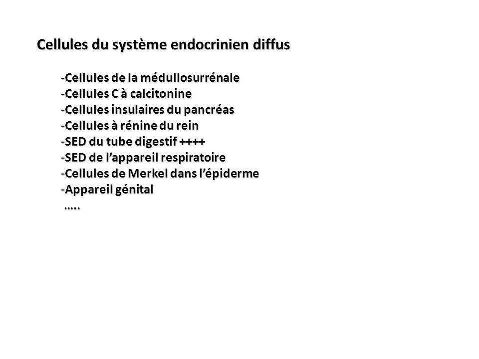 Cellules du système endocrinien diffus -Cellules de la médullosurrénale -Cellules C à calcitonine -Cellules insulaires du pancréas -Cellules à rénine