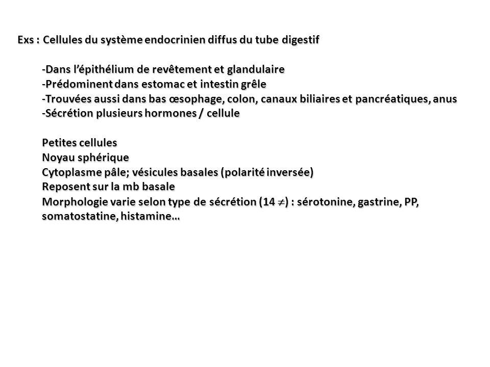 Exs : Cellules du système endocrinien diffus du tube digestif -Dans lépithélium de revêtement et glandulaire -Prédominent dans estomac et intestin grê