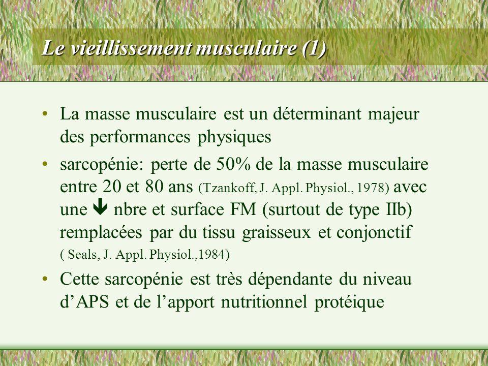 Le vieillissement musculaire (1) La masse musculaire est un déterminant majeur des performances physiques sarcopénie: perte de 50% de la masse muscula