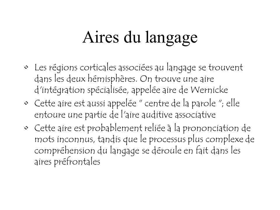 Aires du langage Les régions corticales associées au langage se trouvent dans les deux hémisphères. On trouve une aire d'intégration spécialisée, appe