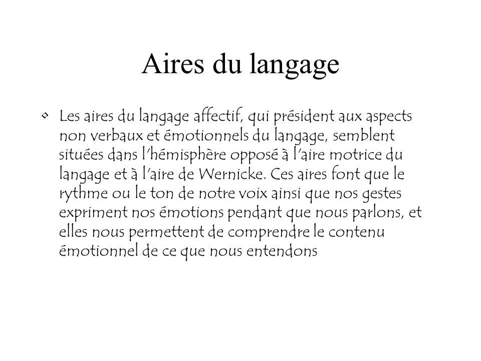 Aires du langage Les aires du langage affectif, qui président aux aspects non verbaux et émotionnels du langage, semblent situées dans l'hémisphère op