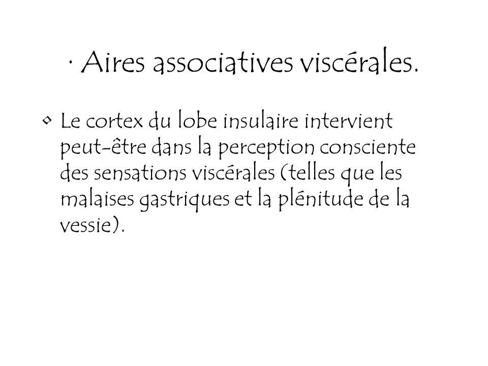 · Aires associatives viscérales. Le cortex du lobe insulaire intervient peut-être dans la perception consciente des sensations viscérales (telles que