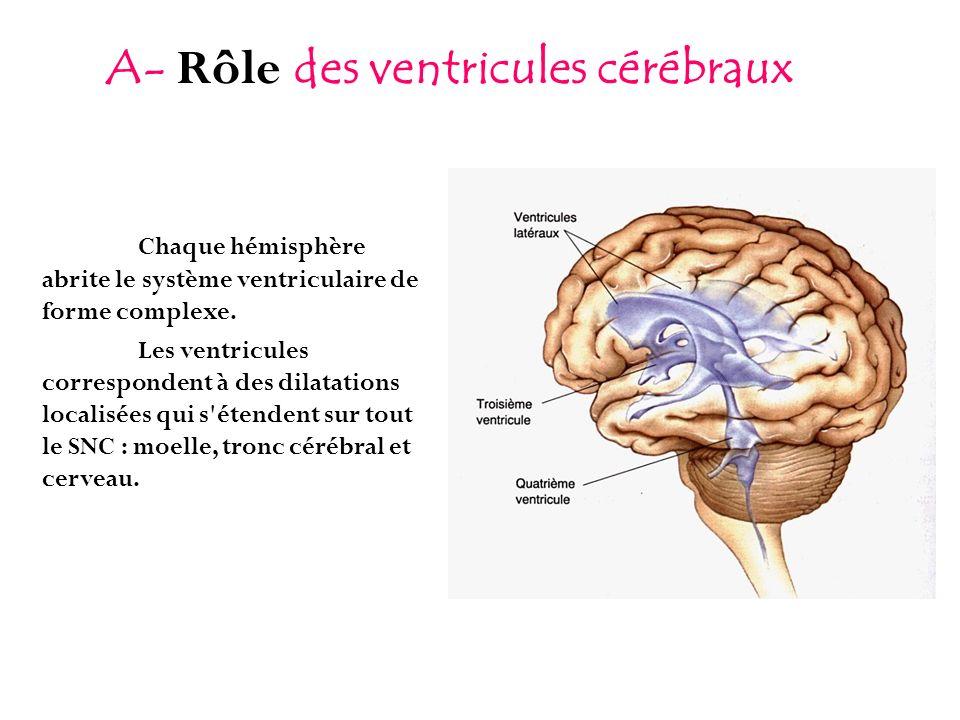 Chaque hémisphère abrite le système ventriculaire de forme complexe. Les ventricules correspondent à des dilatations localisées qui s'étendent sur tou