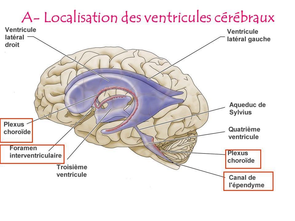 A- Localisation des ventricules cérébraux
