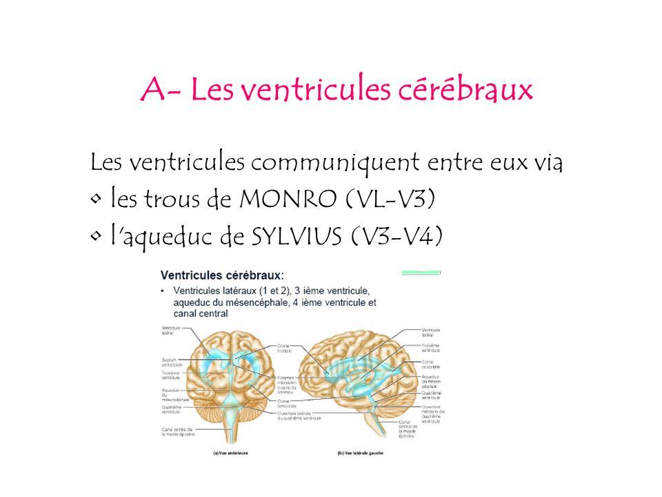 A- Les ventricules cérébraux Les ventricules communiquent entre eux via les trous de MONRO (VL-V3) l'aqueduc de SYLVIUS (V3-V4)