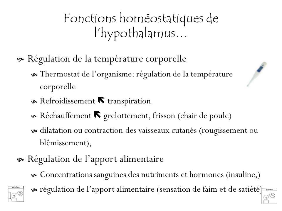 Fonctions homéostatiques de lhypothalamus… Régulation de la température corporelle Thermostat de lorganisme: régulation de la température corporelle R