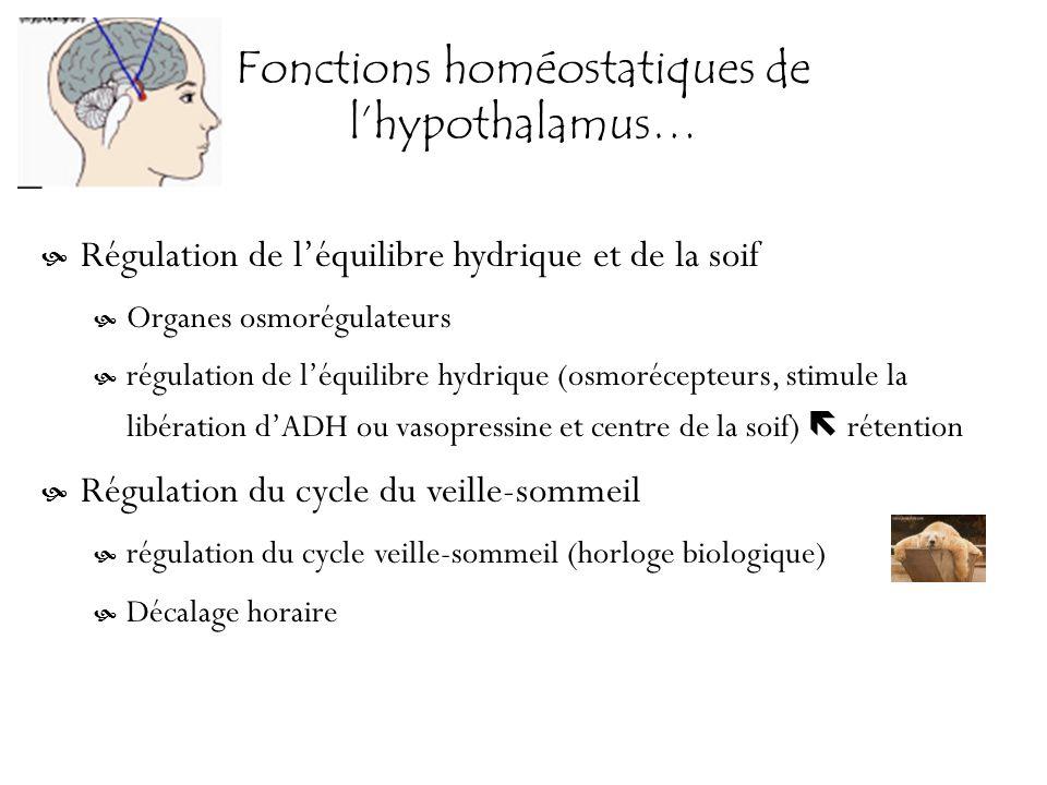 Fonctions homéostatiques de lhypothalamus… Régulation de léquilibre hydrique et de la soif Organes osmorégulateurs régulation de léquilibre hydrique (