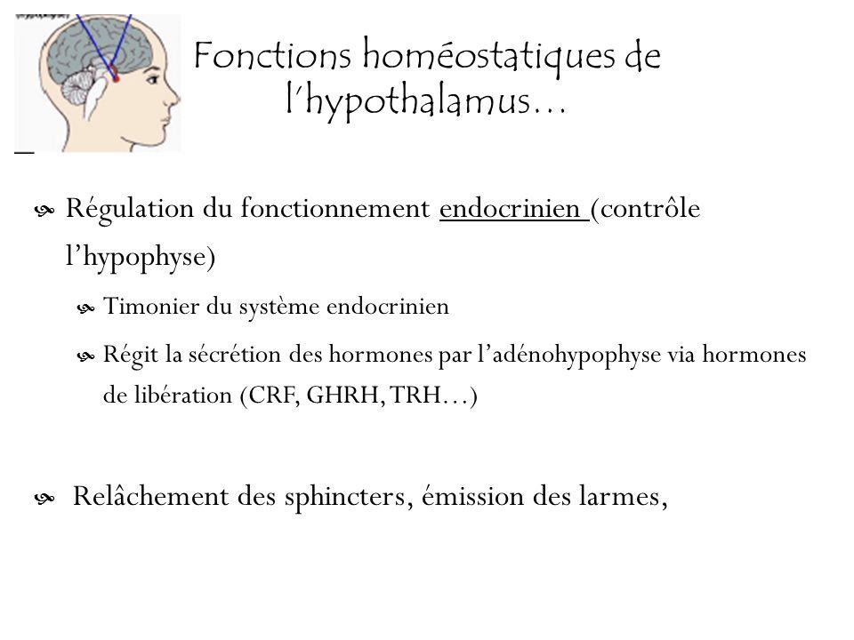 Fonctions homéostatiques de lhypothalamus… Régulation du fonctionnement endocrinien (contrôle lhypophyse) Timonier du système endocrinien Régit la séc