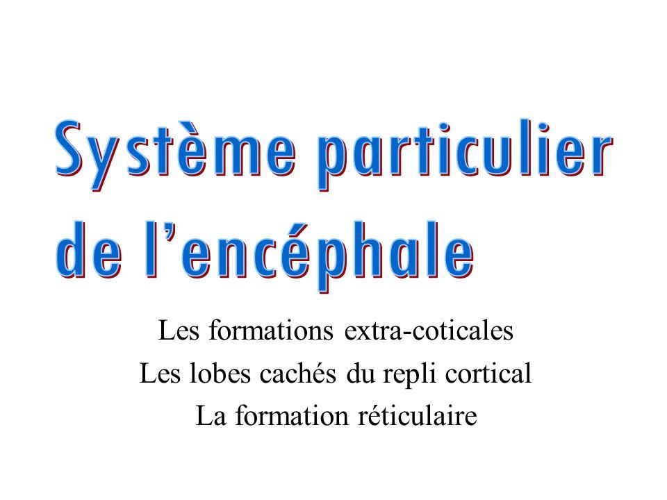 Les formations extra-coticales Les lobes cachés du repli cortical La formation réticulaire