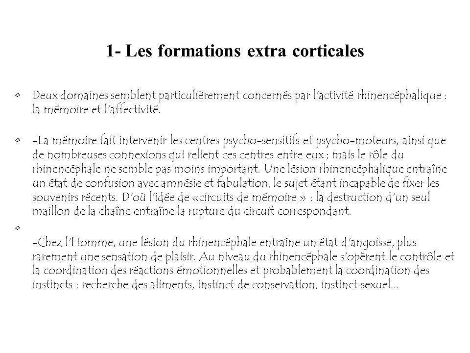 1- Les formations extra corticales Deux domaines semblent particulièrement concernés par l'activité rhinencéphalique : la mémoire et l'affectivité. -L