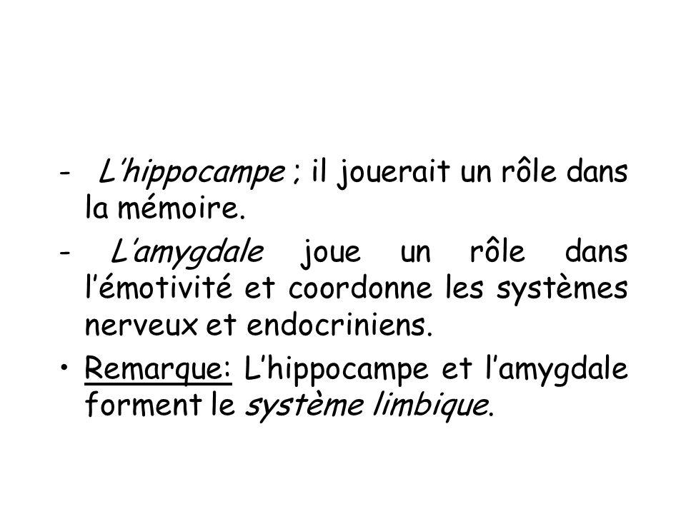 - Lhippocampe ; il jouerait un rôle dans la mémoire. - Lamygdale joue un rôle dans lémotivité et coordonne les systèmes nerveux et endocriniens. Remar