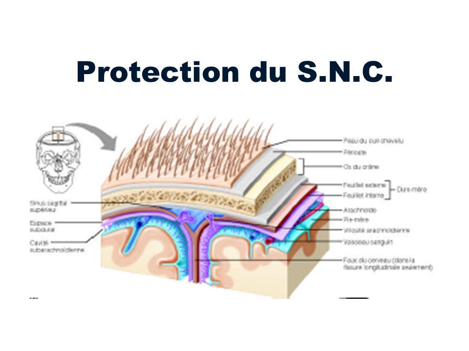 Protection du S.N.C.