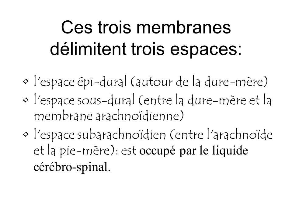Ces trois membranes délimitent trois espaces: l'espace épi-dural (autour de la dure-mère) l'espace sous-dural (entre la dure-mère et la membrane arach