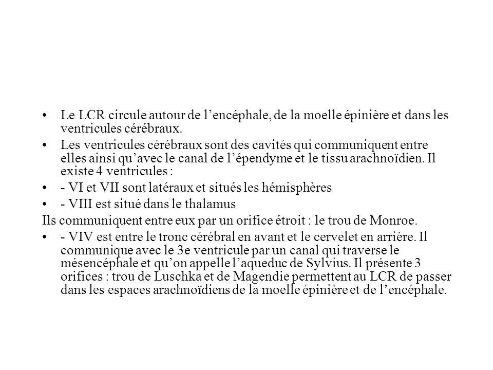 Le LCR circule autour de lencéphale, de la moelle épinière et dans les ventricules cérébraux. Les ventricules cérébraux sont des cavités qui communiqu