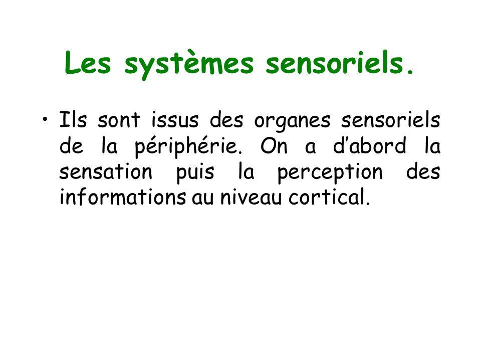 Ils sont issus des organes sensoriels de la périphérie. On a dabord la sensation puis la perception des informations au niveau cortical.