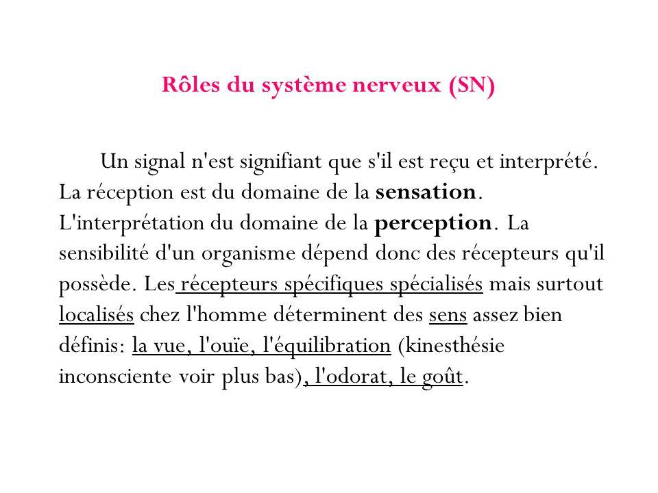 Rôles du système nerveux (SN) Un signal n'est signifiant que s'il est reçu et interprété. La réception est du domaine de la sensation. L'interprétatio