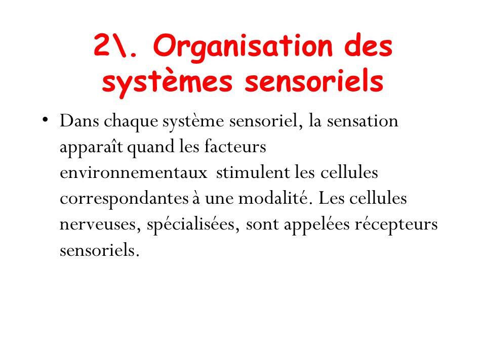 2\. Organisation des systèmes sensoriels Dans chaque système sensoriel, la sensation apparaît quand les facteurs environnementaux stimulent les cellul
