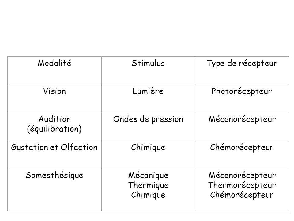 ModalitéStimulusType de récepteur VisionLumièrePhotorécepteur Audition (équilibration) Ondes de pressionMécanorécepteur Gustation et OlfactionChimique
