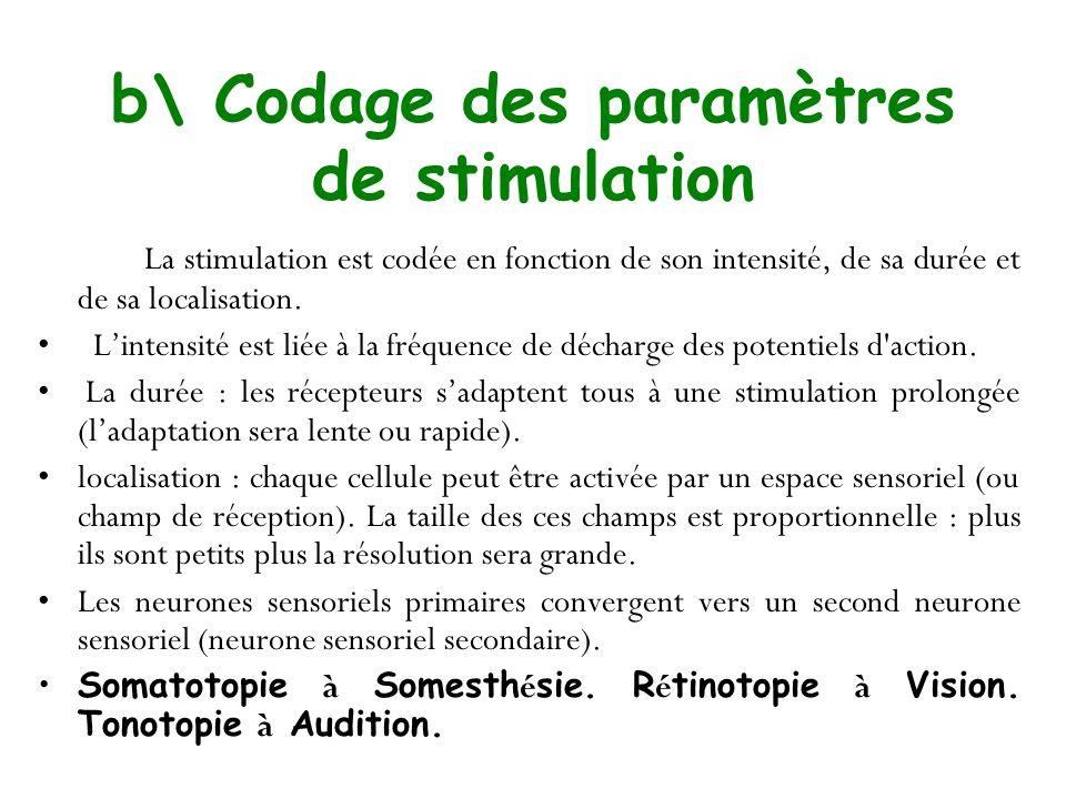 b\ Codage des paramètres de stimulation La stimulation est codée en fonction de son intensité, de sa durée et de sa localisation. Lintensité est liée