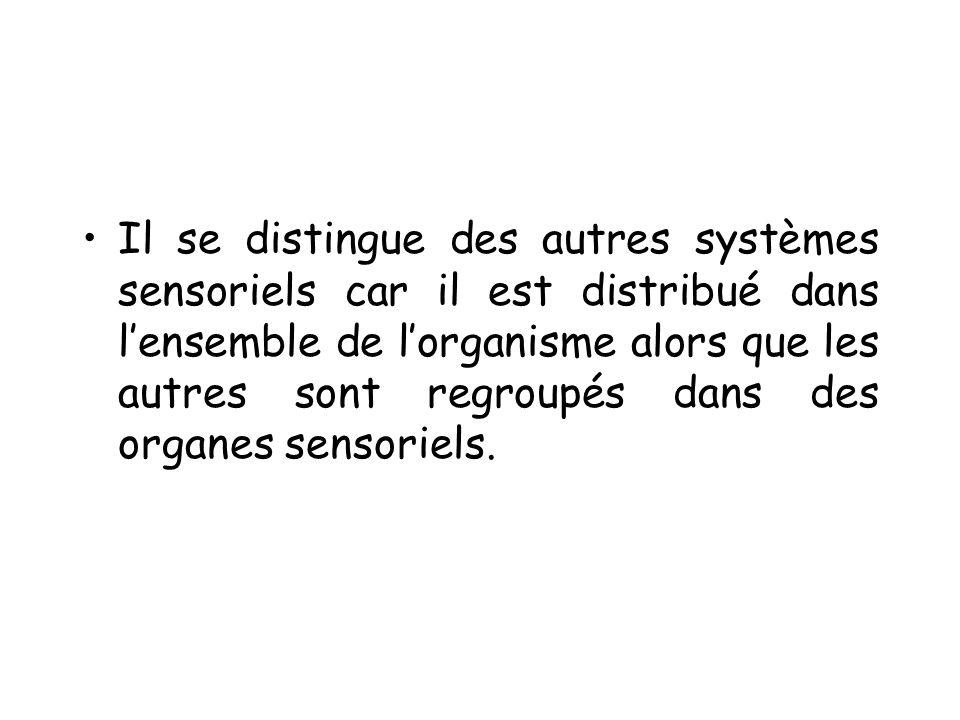 Il se distingue des autres systèmes sensoriels car il est distribué dans lensemble de lorganisme alors que les autres sont regroupés dans des organes