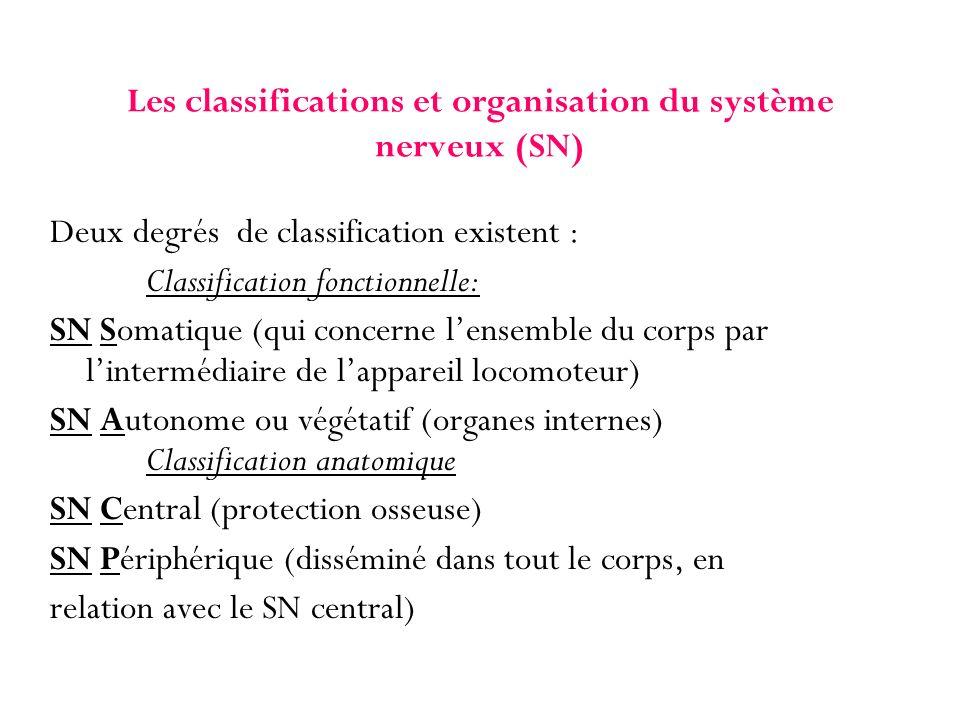 Les classifications et organisation du système nerveux (SN) Deux degrés de classification existent : Classification fonctionnelle: SN Somatique (qui c