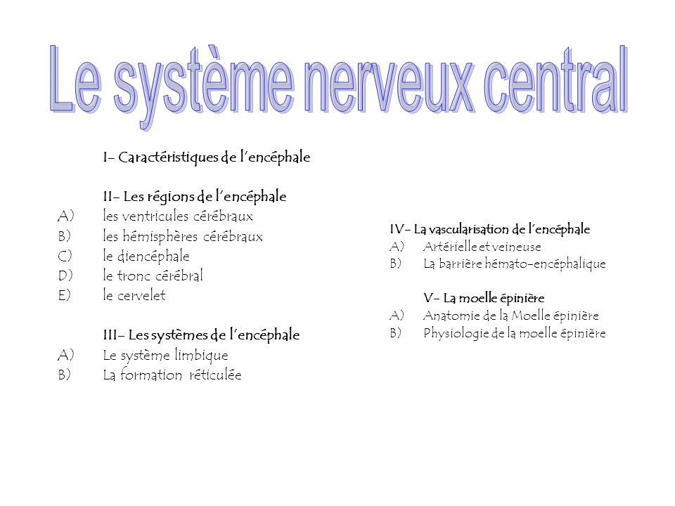 I- Caractéristiques de lencéphale II- Les régions de lencéphale A)les ventricules cérébraux B)les hémisphères cérébraux C)le diencéphale D)le tronc cé