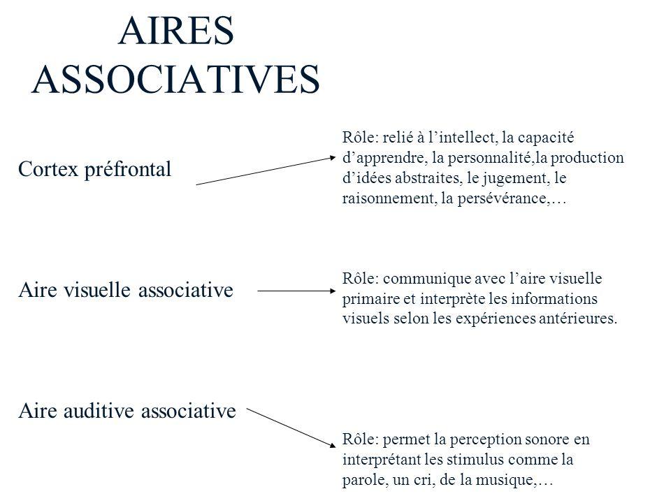 AIRES ASSOCIATIVES Rôle: relié à lintellect, la capacité dapprendre, la personnalité,la production didées abstraites, le jugement, le raisonnement, la