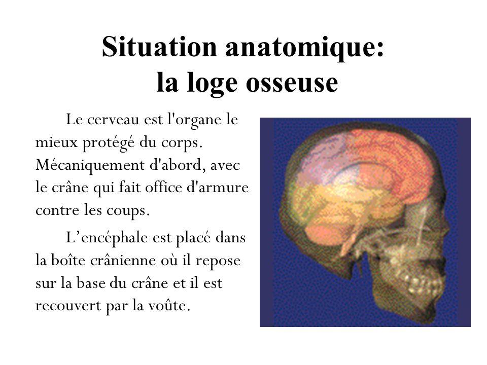 Situation anatomique: la loge osseuse Le cerveau est l'organe le mieux protégé du corps. Mécaniquement d'abord, avec le crâne qui fait office d'armure