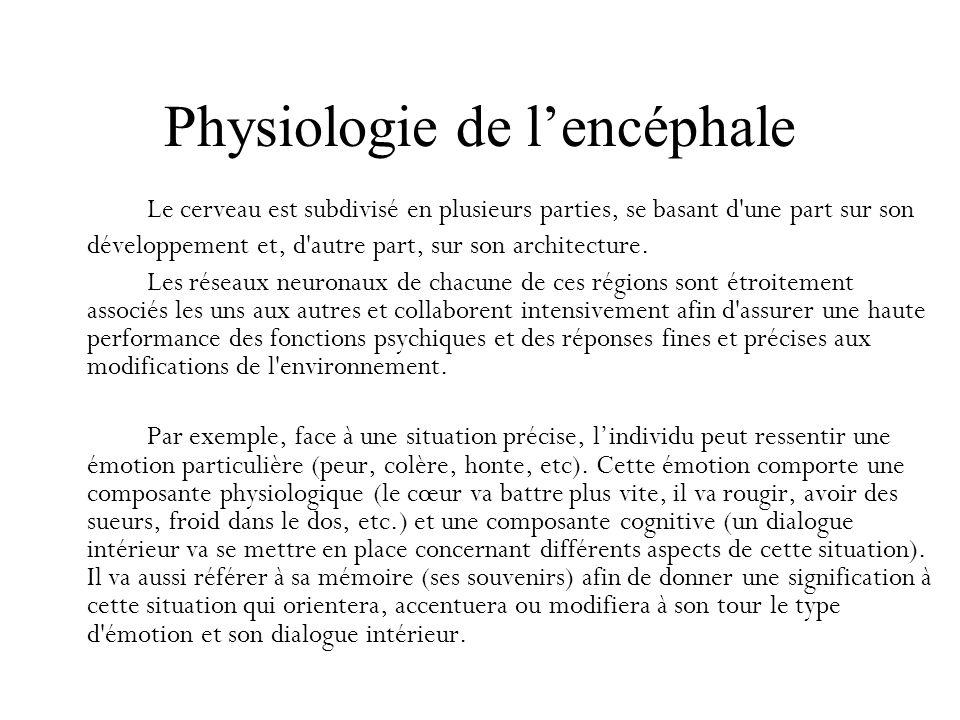 Physiologie de lencéphale Le cerveau est subdivisé en plusieurs parties, se basant d'une part sur son développement et, d'autre part, sur son architec