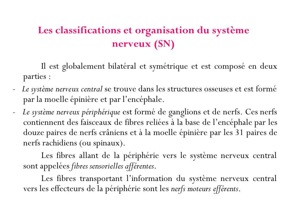 Les classifications et organisation du système nerveux (SN) Il est globalement bilatéral et symétrique et est composé en deux parties : - Le système n