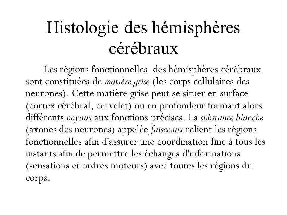 Histologie des hémisphères cérébraux Les régions fonctionnelles des hémisphères cérébraux sont constituées de matière grise (les corps cellulaires des