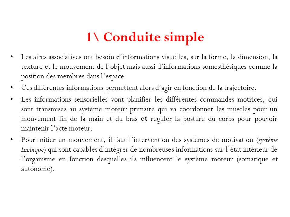 1\ Conduite simple Les aires associatives ont besoin dinformations visuelles, sur la forme, la dimension, la texture et le mouvement de lobjet mais au