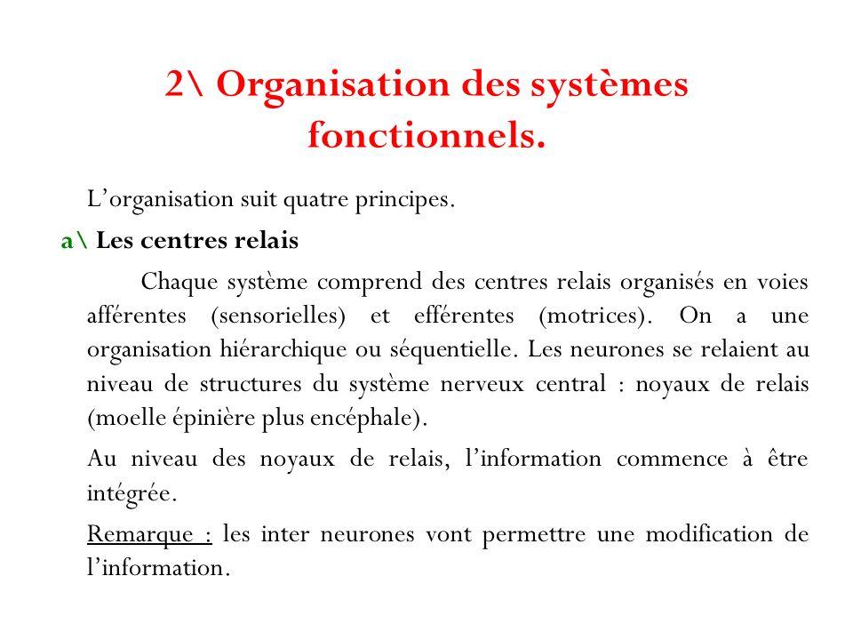 2\ Organisation des systèmes fonctionnels. Lorganisation suit quatre principes. a\ Les centres relais Chaque système comprend des centres relais organ