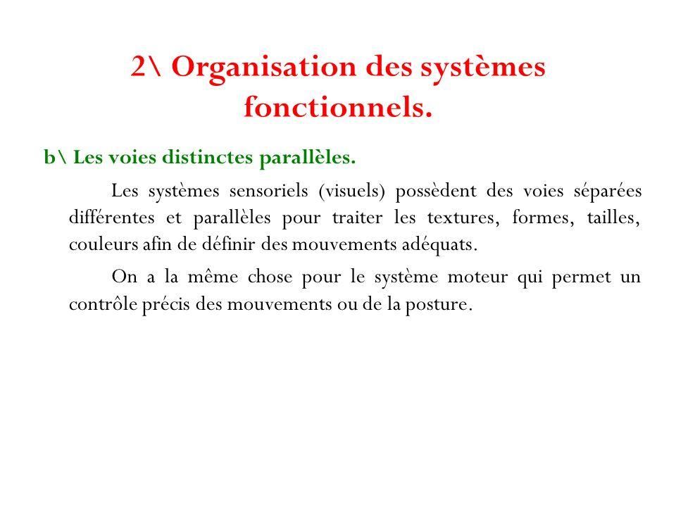 2\ Organisation des systèmes fonctionnels. b\ Les voies distinctes parallèles. Les systèmes sensoriels (visuels) possèdent des voies séparées différen