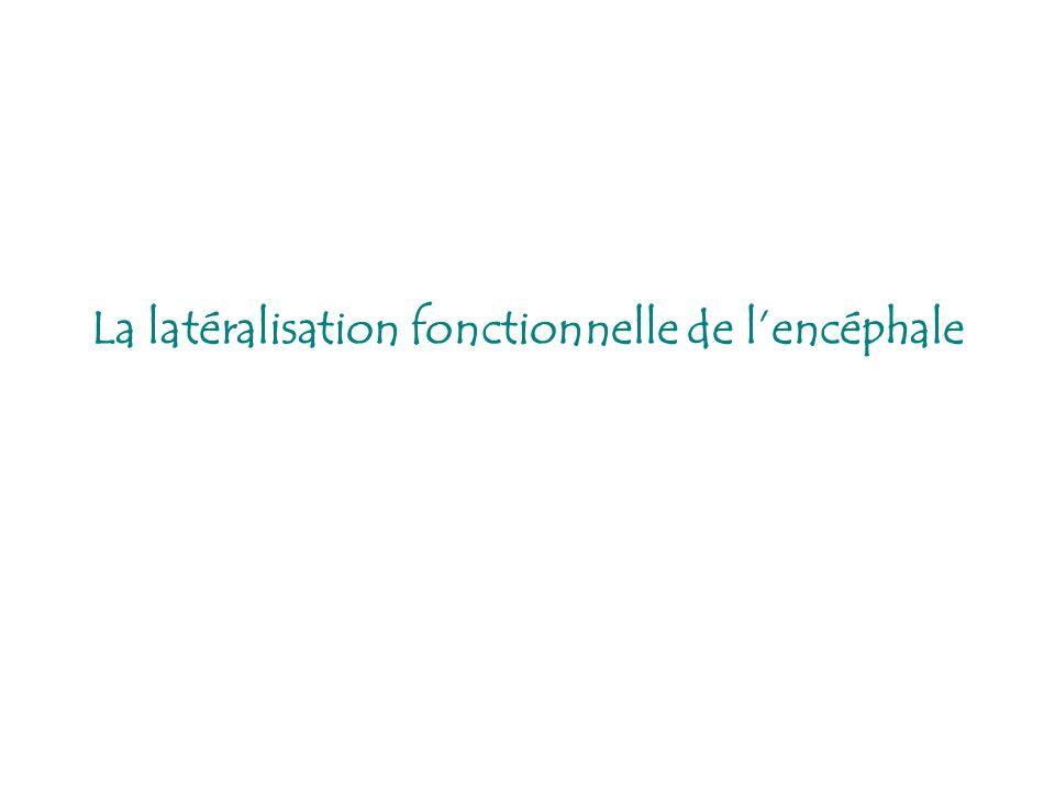 La latéralisation fonctionnelle de lencéphale