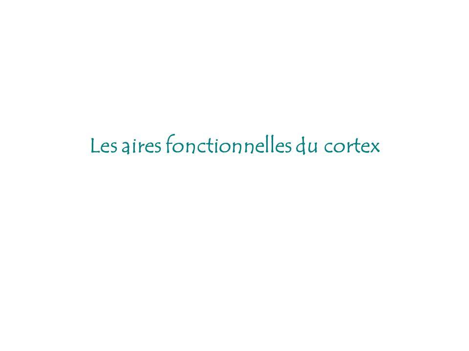 Les aires fonctionnelles du cortex