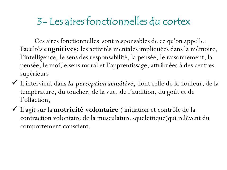 3- Les aires fonctionnelles du cortex Ces aires fonctionnelles sont responsables de ce qu'on appelle: Facultés cognitives: les activités mentales impl
