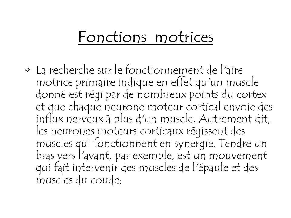 Fonctions motrices La recherche sur le fonctionnement de l'aire motrice primaire indique en effet qu'un muscle donné est régi par de nombreux points d
