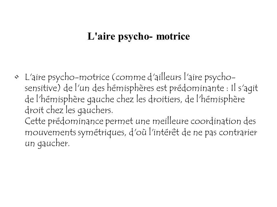 L'aire psycho- motrice L'aire psycho-motrice (comme d'ailleurs l'aire psycho- sensitive) de l'un des hémisphères est prédominante : Il s'agit de l'hém