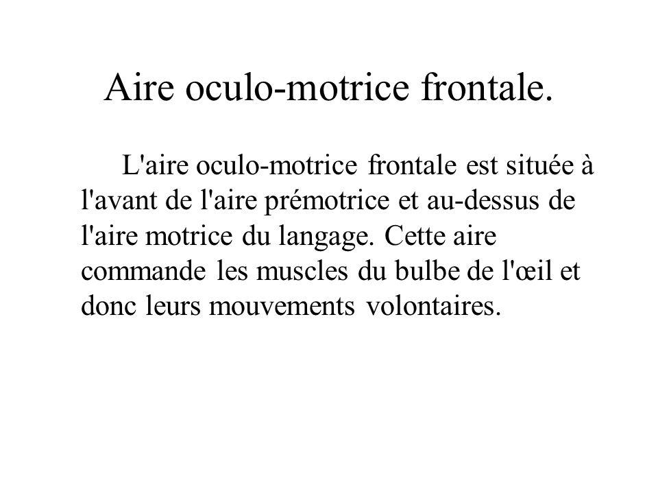 Aire oculo-motrice frontale. L'aire oculo-motrice frontale est située à l'avant de l'aire prémotrice et au-dessus de l'aire motrice du langage. Cette