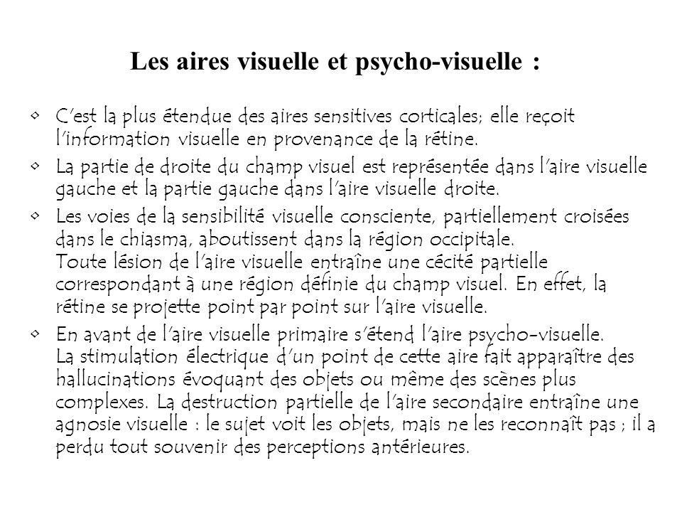 Les aires visuelle et psycho-visuelle : C'est la plus étendue des aires sensitives corticales; elle reçoit l'information visuelle en provenance de la