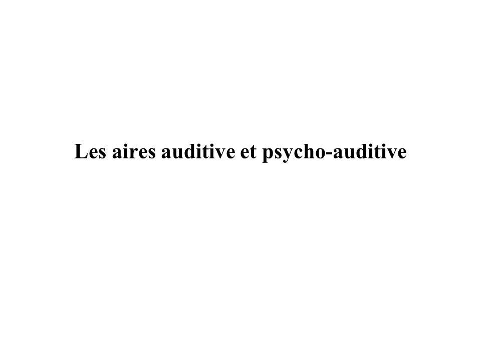 Les aires auditive et psycho-auditive