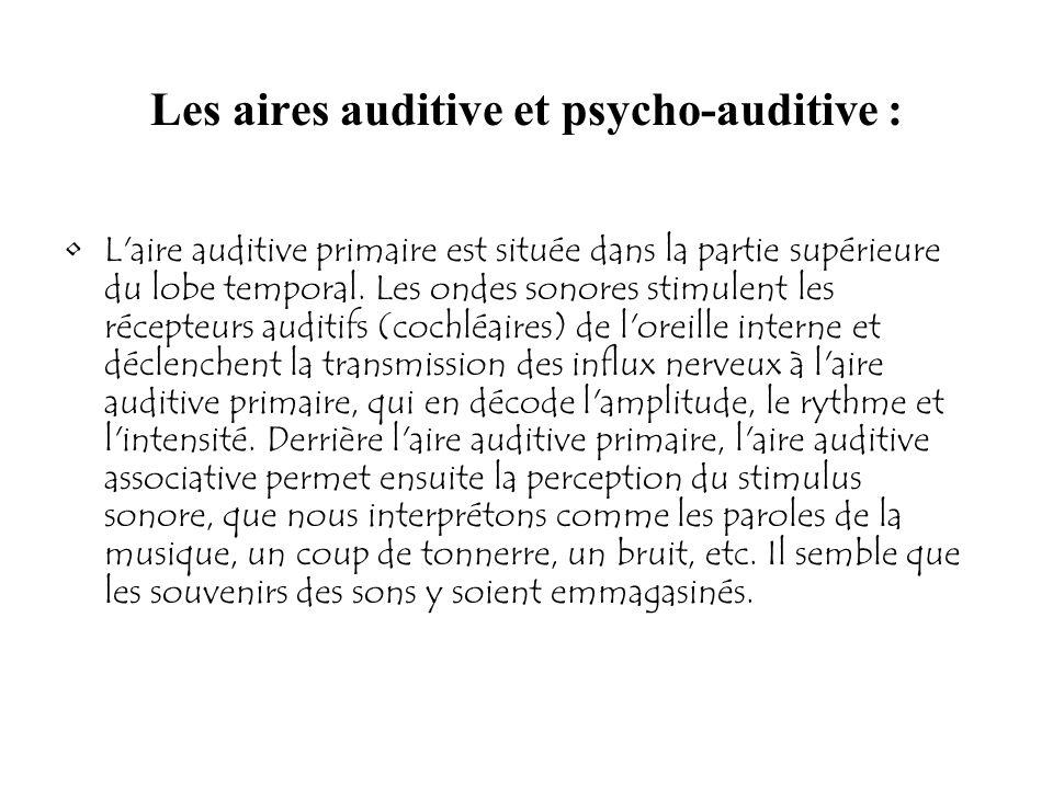 Les aires auditive et psycho-auditive : L'aire auditive primaire est située dans la partie supérieure du lobe temporal. Les ondes sonores stimulent le
