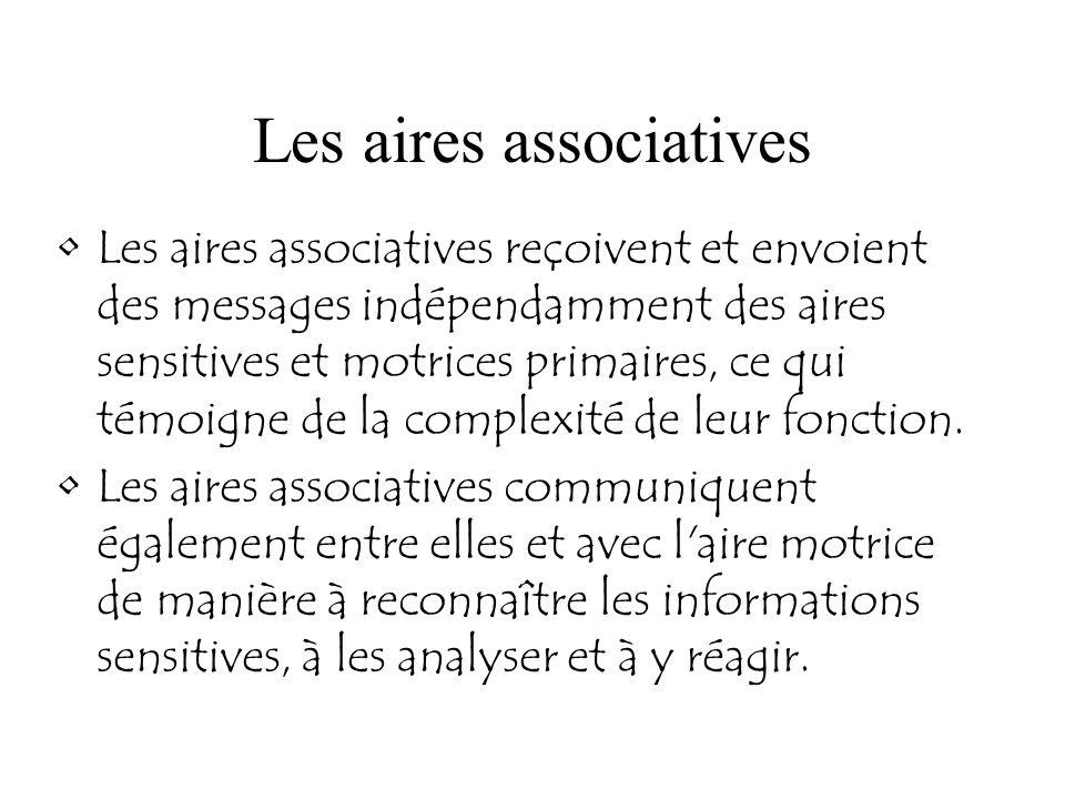 Les aires associatives Les aires associatives reçoivent et envoient des messages indépendamment des aires sensitives et motrices primaires, ce qui tém